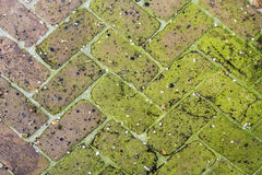 Old tiles at the sidewalk Stock Photography