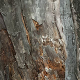 Old Timber Wood. Abstract background Royalty Free Stock Photos