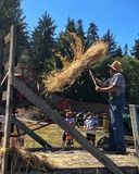 Old time farmer. Pitches wheat into antique threshing machine at the Comox Valley Exhibition Stock Photography