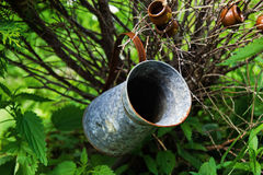 Old tin jar on a brunch in a garden. Royalty Free Stock Photos