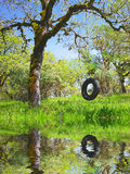 Old Tire Swing - Childhood Memories. Old Tire Swing in an Oak Tree in Spring Reflecting in Water Stock Photos