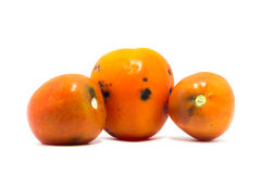 Old tomato on white background Royalty Free Stock Photography