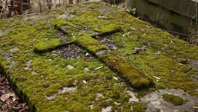 Old tomb covered green moss stock video