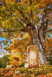 Old Tombstone Next To A Big Tree In Autumn Cemetery Royalty Free Stock Image