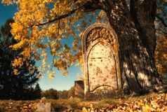 Old tombstone next to a big tree in autumn cemetery royalty free stock images