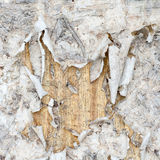 Old torn paper on wood wall. Closeup Stock Photos