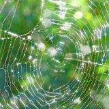Old torn spiderweb shines in the sun Royalty Free Stock Photo