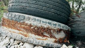 Old torn truck tires thrown by the road. This is footage of Old torn truck tires thrown by the road stock video footage