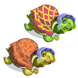 Old tortoise in grandmothers suit holds golden key. Old tortoise in a grandmothers suit holds golden key. Vector animals on a white background. Illustration Royalty Free Stock Photo