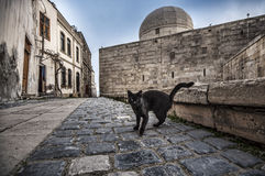 Old Town of Baku. Street black colored cat at old town street. Royalty Free Stock Photos