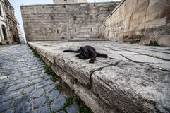 Old Town of Baku. Street black colored cat at old town street. Royalty Free Stock Image