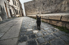 Old Town of Baku. Street black colored cat at old town street. Stock Photo