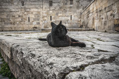 Old Town of Baku. Street black colored cat at old town street. Stock Photos