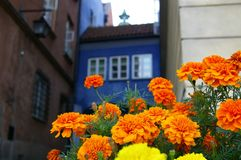 Old town flowers Stock Photos