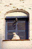 Old town window with cats toy Stock Photography