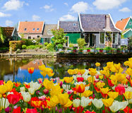 Old  town of Zaandijk, Netherlands. Rural dutch scenery with tulips of small old town Zaandijk, Netherlands Stock Photos