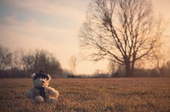 Old toy bear sit in field Royalty Free Stock Image
