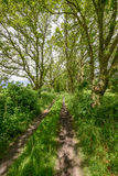 Old track between trees and fields Royalty Free Stock Photo
