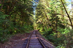 Old Tracks in the Woods. Some old train tracks that run along the woods next to the Lewis River Royalty Free Stock Images