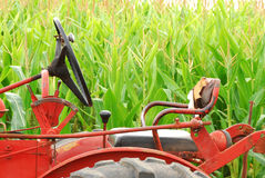 Old Tractor and Corn. Old tractor in front of field corn soon to be a Halloween corn maze Stock Photo