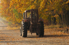 Old tractor rides along the planting of autumn trees Royalty Free Stock Image