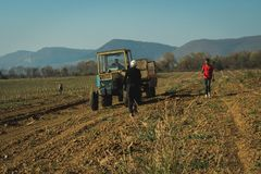 Old tractor tillage plum field in Bulgaria royalty free stock photo