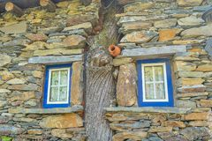 Old tradicional house with tree and blue frame windows. _ Portugal _ Piodão Village _ Rustic and touristic Royalty Free Stock Image