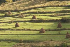 Old traditional hay stacks Stock Images