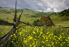 Old traditional Romanian barn with straw roof. Old traditional Romanian barn or shack with straw roof and a lot of yellow flowers. The house is made exclusively Stock Photo