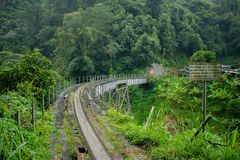 Old Train Tracks in Colombian Jungle royalty free stock image