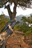 Old tree. In mountains near sea shore Royalty Free Stock Images