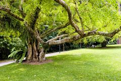 Old Tree. Photo of an Old Tree Royalty Free Stock Photography