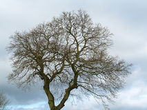 Old tree. Detail view of old tree silhouette royalty free stock photography