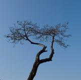 Old tree. Stock Photo