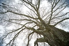 old tree. Stock Images