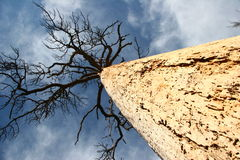 Old tree. And a blue sky royalty free stock photography