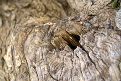 Old tree. Details of old tree cutted down Royalty Free Stock Images
