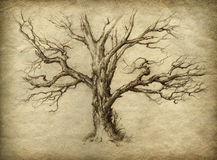 Old Tree. Old dry tree, drawn with pencil on paper Royalty Free Stock Image