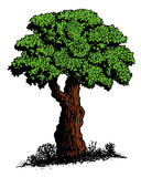 Old Tree. Hand drawn tree in cartoon style Royalty Free Stock Images
