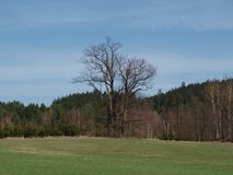 Old tree. Spring meadow and lonely dry tree. South Bohemia stock photo