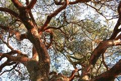 old tree στοκ εικόνα