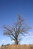 Old tree. In the winter Stock Image