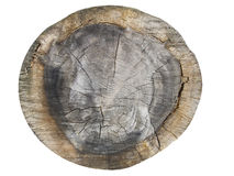 Old tree. Cut of an old tree with annual rings Stock Photos