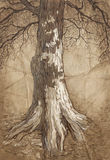 Old tree. Tree with leaves . Hand drawing. sketch Royalty Free Stock Photos