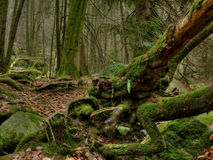 Old tree. S in a dark valley stock photos