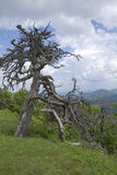 Old Tree Above Ancient Mountains Royalty Free Stock Photo