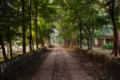 Old tree alley in park Royalty Free Stock Photography