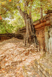 Old tree along the enclosure, Ta Prohm temple, Angkor Thom, Siem Reap, Cambodia. Stock Photos