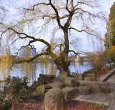An old tree along the river. stock photo