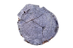 Old Tree annual ring circle wood (Die cutting) Stock Photography